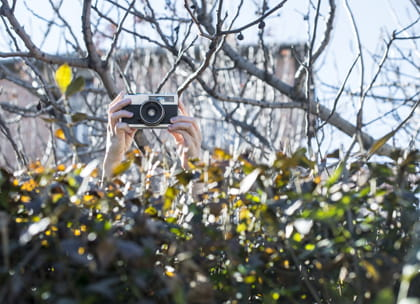 Camera behind hedge